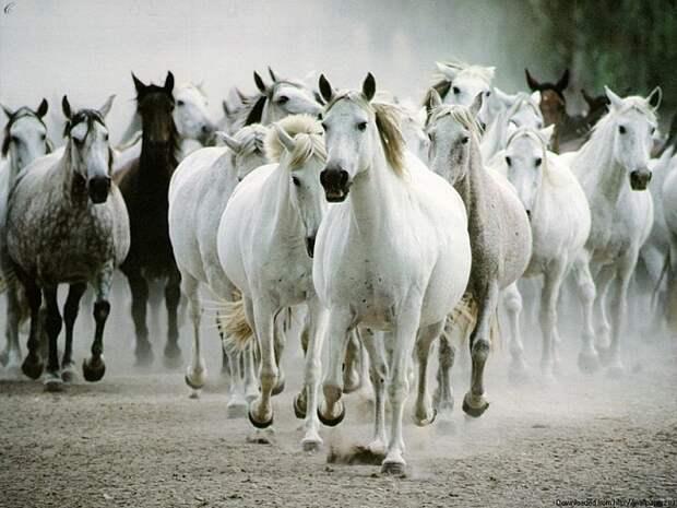 Под Одессой конокрады увели лошадей из-под носа фермера - Pro-NEWS Новости от профессионалов