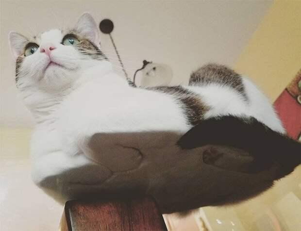 Пятки, пузики и шерсть: убойная доза милоты — котики на стекле, вид снизу