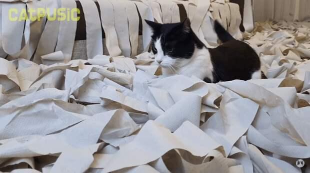 Пусик в восторге, хоть по его морде это и не видно Пусик, бумага, видео, животные, кот, рулоны, хозяева