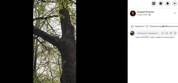 Выпущенные в Лефортовском парке белки обживают территорию