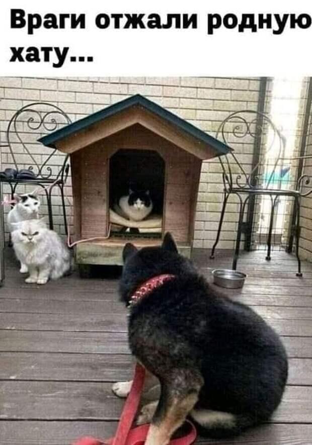 Возможно, это изображение (собака, кот и текст «враги отжали родную хату...»)