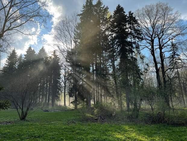 Фото дня: Ботанический сад в лучах солнца