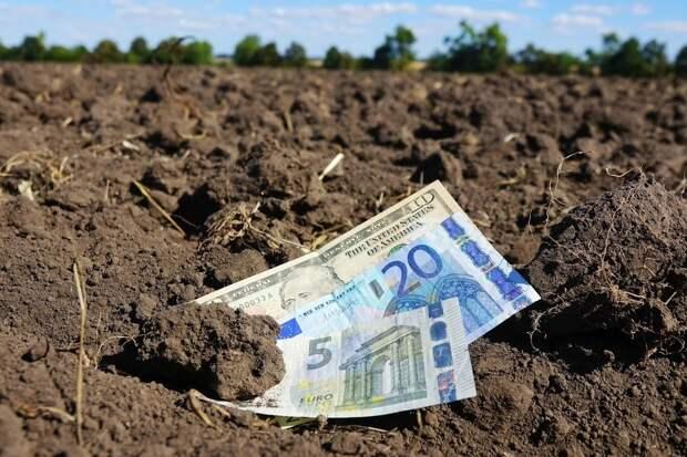 Большинство украинцев против продажи земли иностранцам – результаты опроса