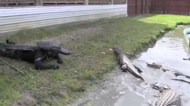 Видео: Чужие среди своих — как животные принимают людей, которые хотят подружиться