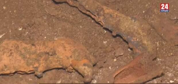 Дикобраз, карликовый бобёр и древний хорёк: Каких животных нашли  крымские учёные в пещере «Таврида»