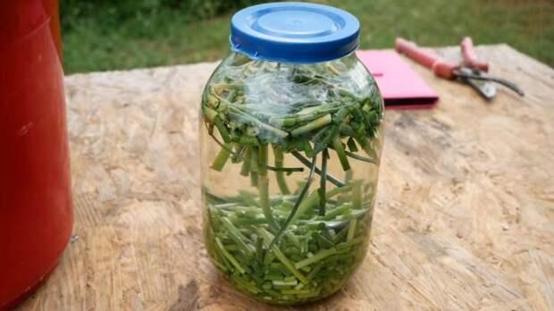Без химии на огороде: готовим натуральный инсектицид и фунгицид