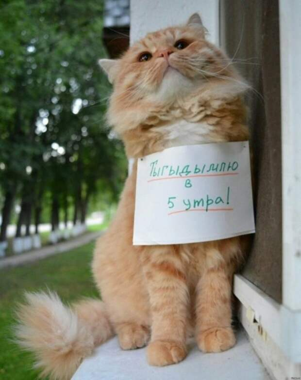рыжий кот с запиской на груди