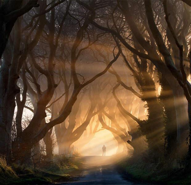 Темная буковая аллея в северной Ирландии