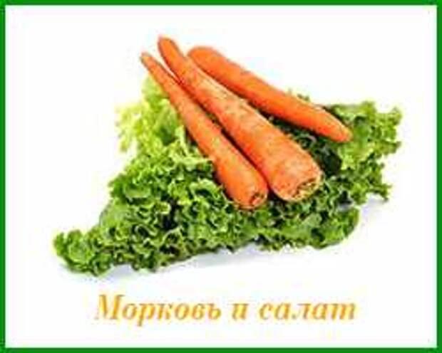 морковь можно сажать с салатом