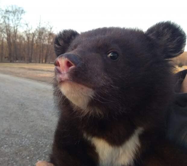 Полицейские обнаружили коробку с медвежонком прямо посреди трассы интересное, медвежонок, полицейские, фото