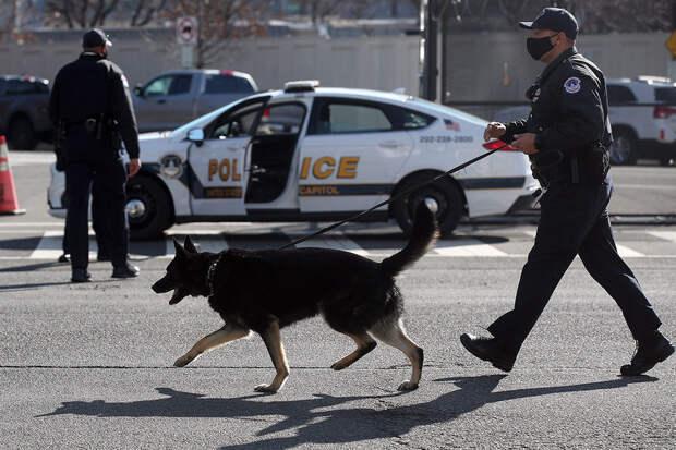 Полицейские собаки Вирджинии потеряли работу после легализации марихуаны