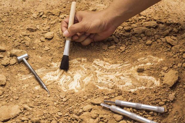 В отпуск на раскопки: как на время стать археологом