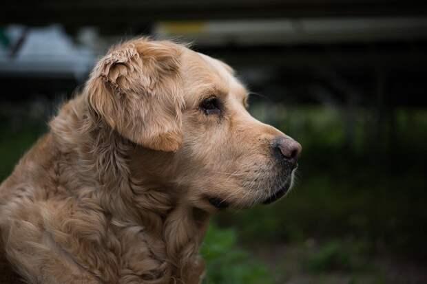 «А меня на ручки?»: пёс, который вырос в окружении котов, постоянно пытается залезть на хозяина