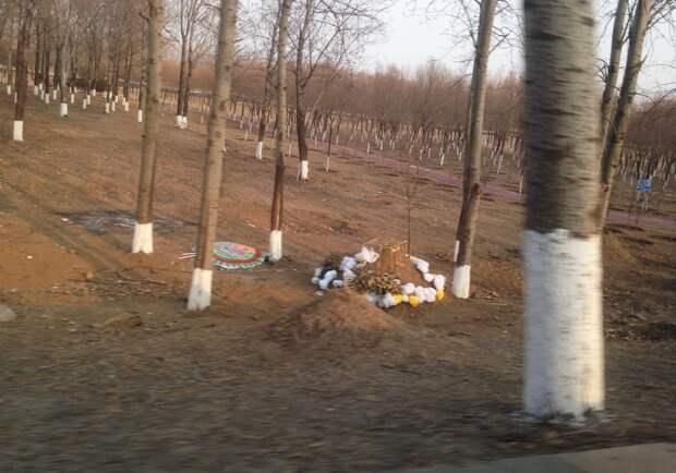 7 грустных фактов о том, как китайцы хоронят близких в кустах
