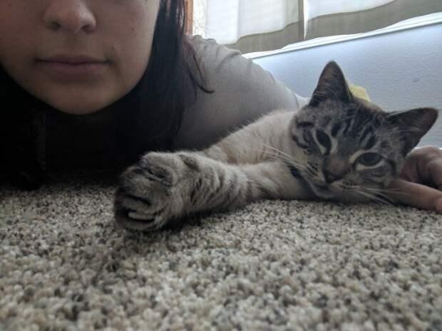 Наши руки не для скуки: королевское ложе для кота домашние животные, коты, кровать, мебель для кошек, мебель из дерева, миниатюрная, самоделки, своими руками