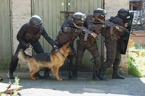 Немецкая овчарка на службе в армии