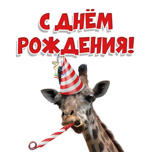 Фото открытка с днём рождения жираф