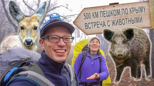 500 км. пешком по Крыму. #4. Встреча с кабаном и косулей. Гора Кокия-Кая и мыс Айя. Санаторий Форос.
