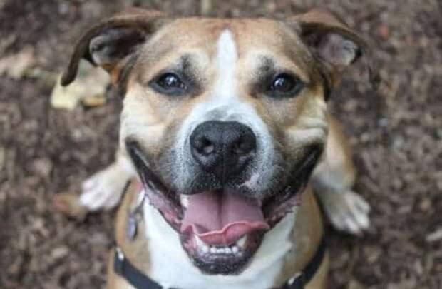 пёс улыбается
