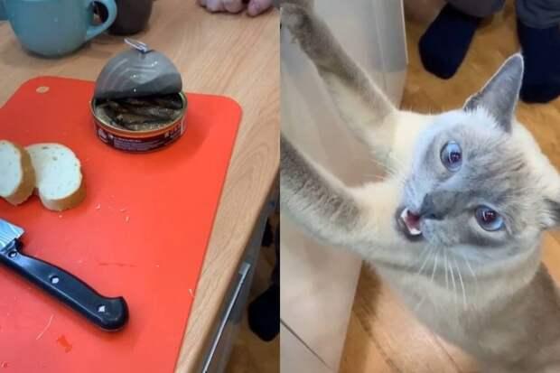 Подозревающий хозяев в воровстве корма кот заставил соцсети хохотать