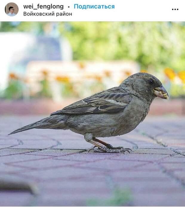 Фото дня: в Войковском застали птичку за трапезой