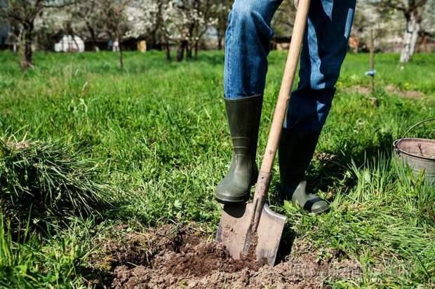 5 причин не перекапывать землю, или Чем полезна безотвальная обработка почвы