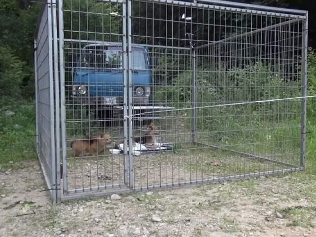Клетка с собаками