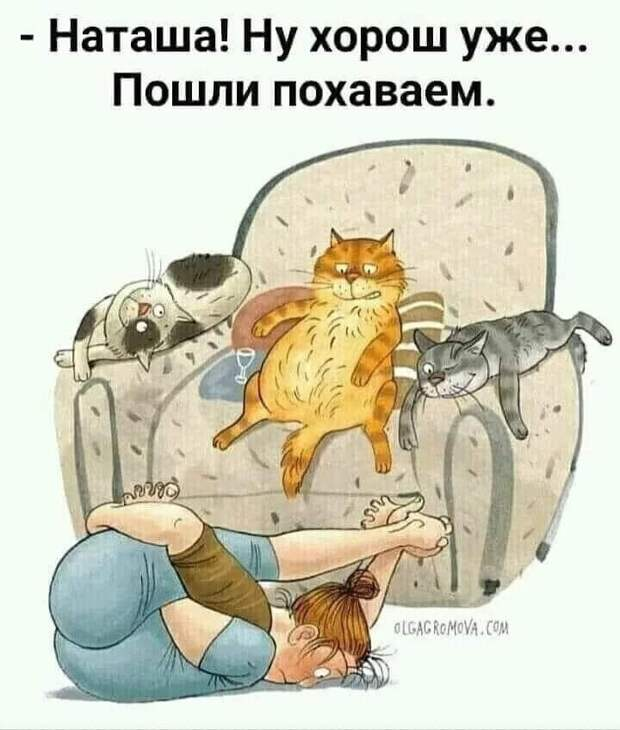 Возможно, это изображение (один или несколько человек, кот и текст)