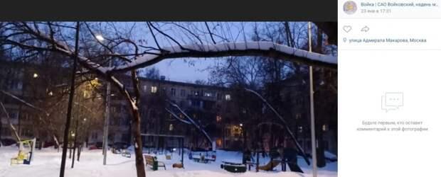 Департамент природы решит судьбу деревьев во дворе на Адмирала Макарова