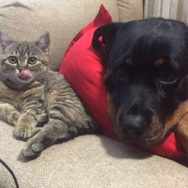 Как два огромных и суровых пса превратились в сумасшедших яжотцов