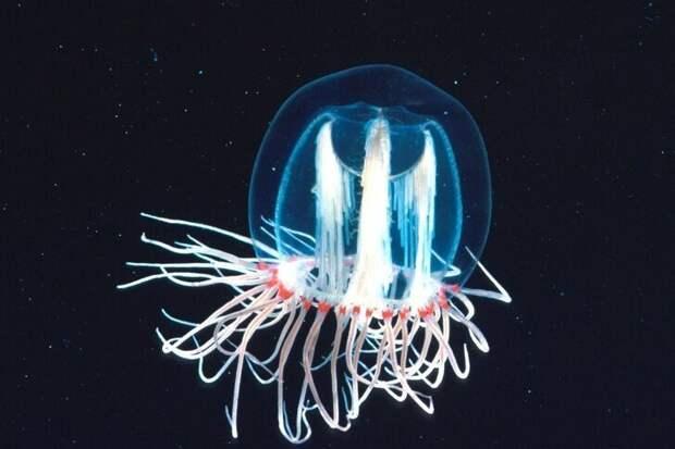 8 удивительных существ нашей планеты, которые приводят в недоумение даже ученых животные, наука, природа, удивительное