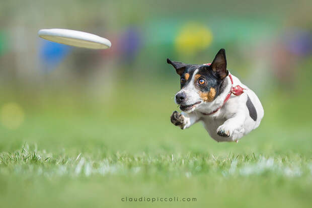 Супер собаки в фото