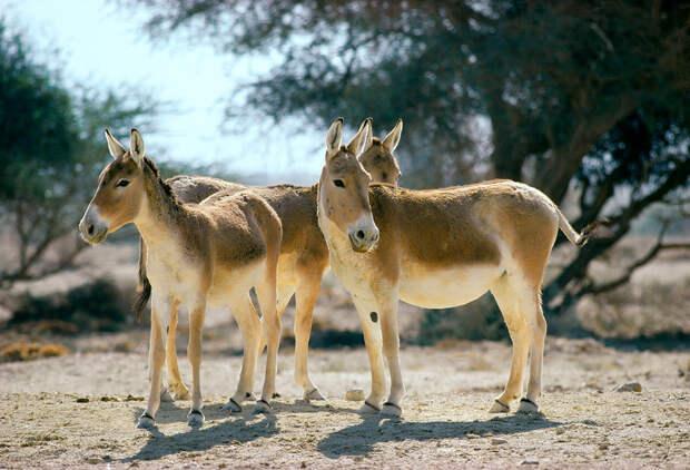 Животные России, которые скорее всего исчезли навсегда (ФОТО)