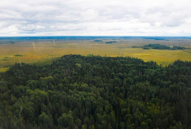 В Тверской области увеличится лесной фонд
