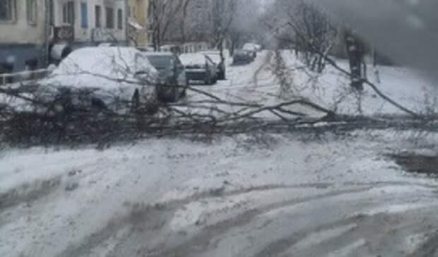 В Петрозаводске упавшее дерево перекрыло дорогу
