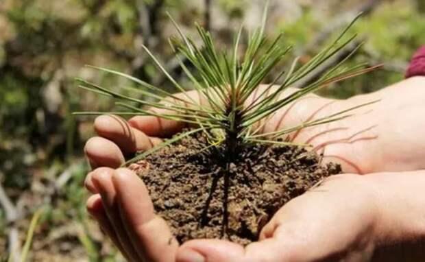 В Красноярском крае восстановят 92 тысячи га лесов