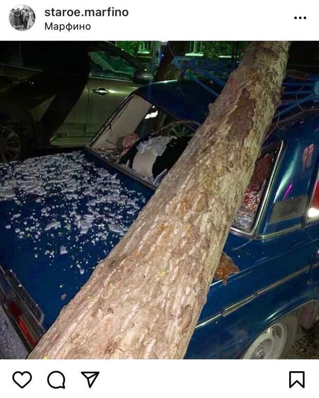 На Малой Ботанической дерево упало на автомобиль
