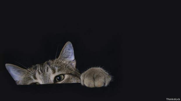 Кот играет в прятки