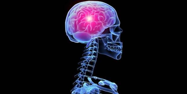 Единственный способ тренировки мозга