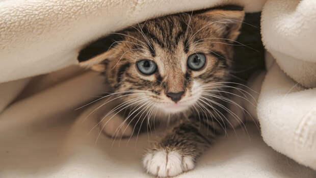 """Четырех котят нашли на месте пожара на """"Невской мануфактуре"""" в Петербурге"""
