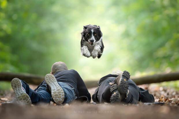 Супер собаки в фотографиях Клаудио Пикколи 29