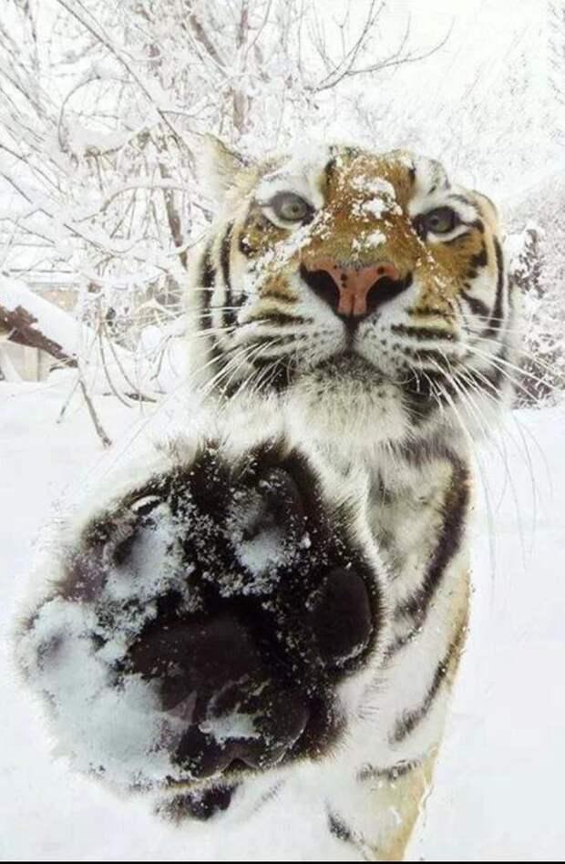 милые животные  у которых не получилось выглядеть устрашающе (17)