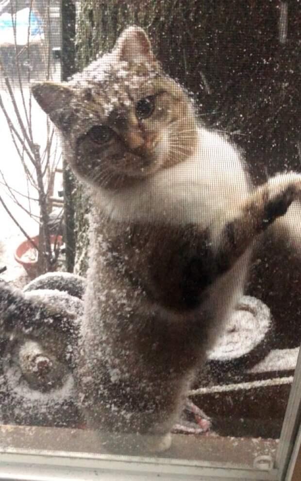 Отчаянная мать в мороз принесла котят к людям, и только через год вернулась сама история, история спасения, коты, котята, кошки, помощь животным, спасение животных