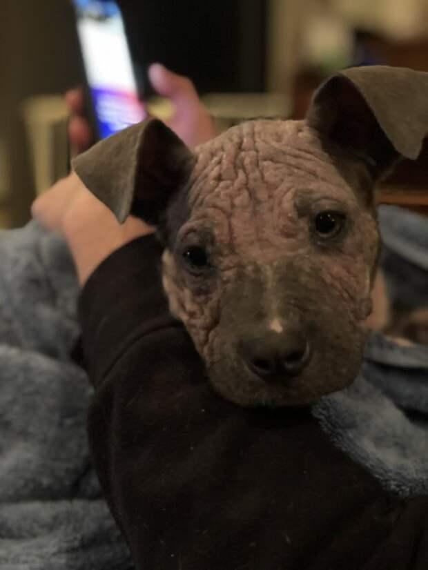 2 больных щенка превратились в красавчиков всего за месяц! Их судьба теперь решена…