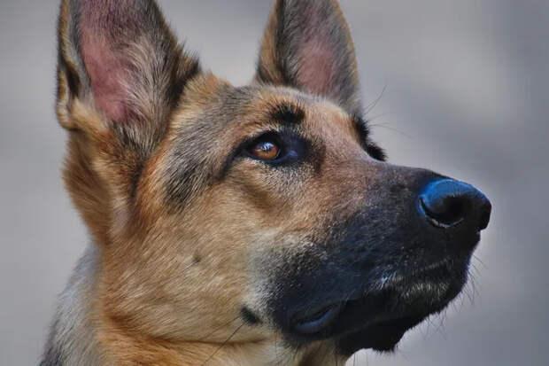 Вернула долг: приютская собака спасла хозяина