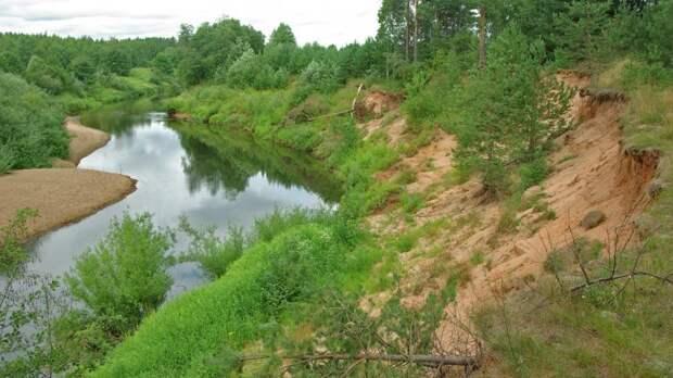 Власти Новгородской области начали проверку после массовой гибели рыбы в реке Холова