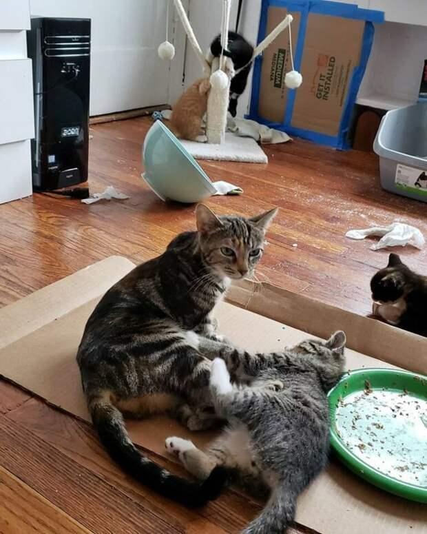 Девушка стала кормить уличную кошку, а потом приютила и ее и ее деток