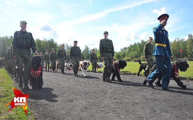 Парад служебных собак прошел в учебном центре в Подмосковье