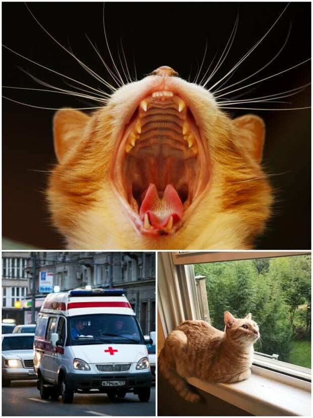 Девушка не любила кошек, а пришлось ухаживать за чужим свирепым зверем